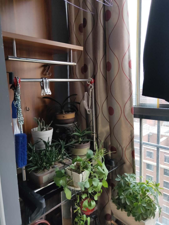金地国际城A区精装1室1厅急售均价超低,双阳台房子保持的很好_10