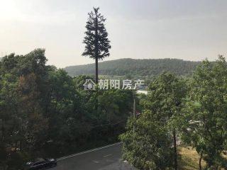 泉山湖公園里毛坯電梯洋房低價出售_11